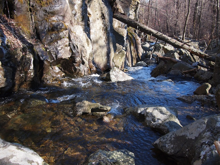 Brook trout fishing report white oak canyon robinson for Shenandoah national park fishing