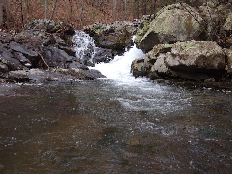 Brook trout fishing report jeremy s run shenandoah for Shenandoah national park fishing