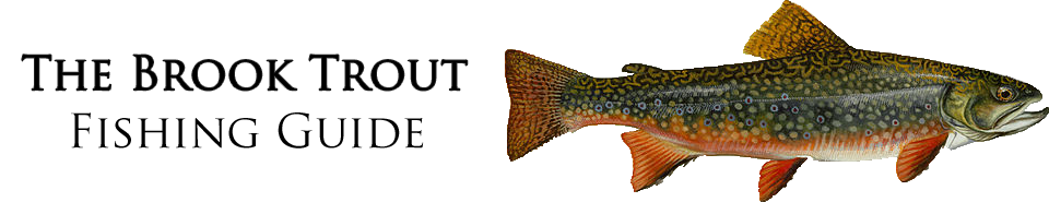 Brook trout fishing guide for Bahamas fishing license
