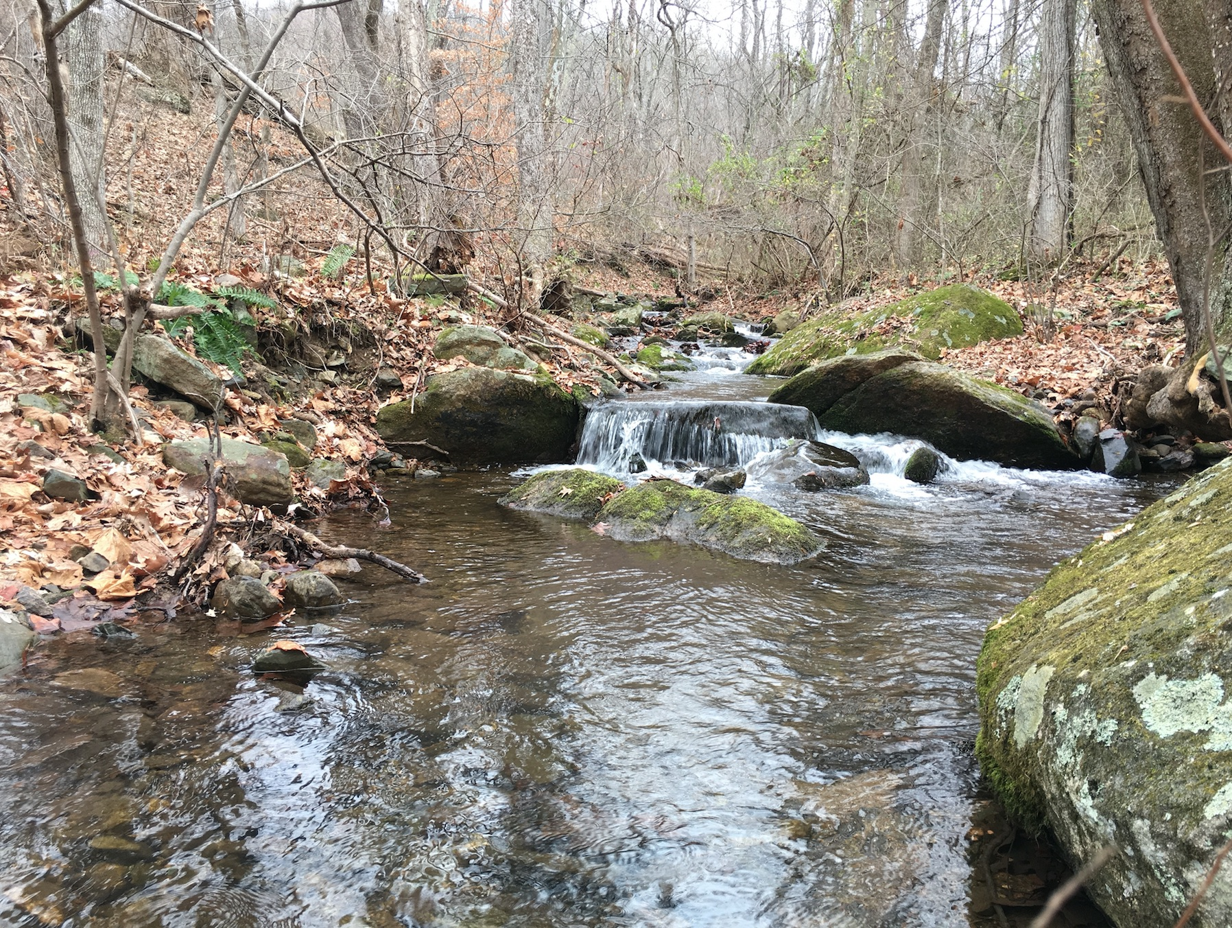 Scouting new brook trout streams brook trout fishing guide for Shenandoah national park fishing
